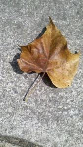 2012-09-26_10-31-18_351